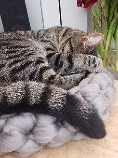 Catbed_Dove_Grey_with_Frodo_08.jpg