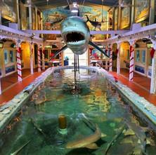 florida-key-west-aquarium_edited.jpg