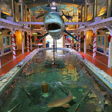 florida-key-west-aquarium.jpg
