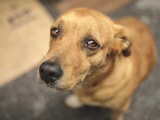 Tamaulipas prohibe corte de cola y oreja a mascotas