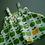Thumbnail: lollipops pinafore