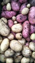 New season potatoes