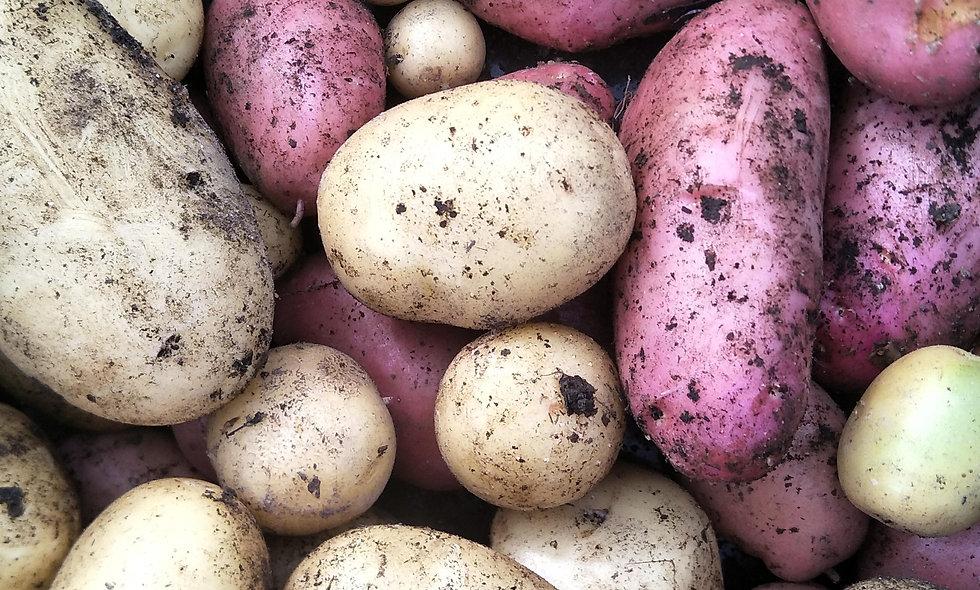 New Season Potatoes 2kg
