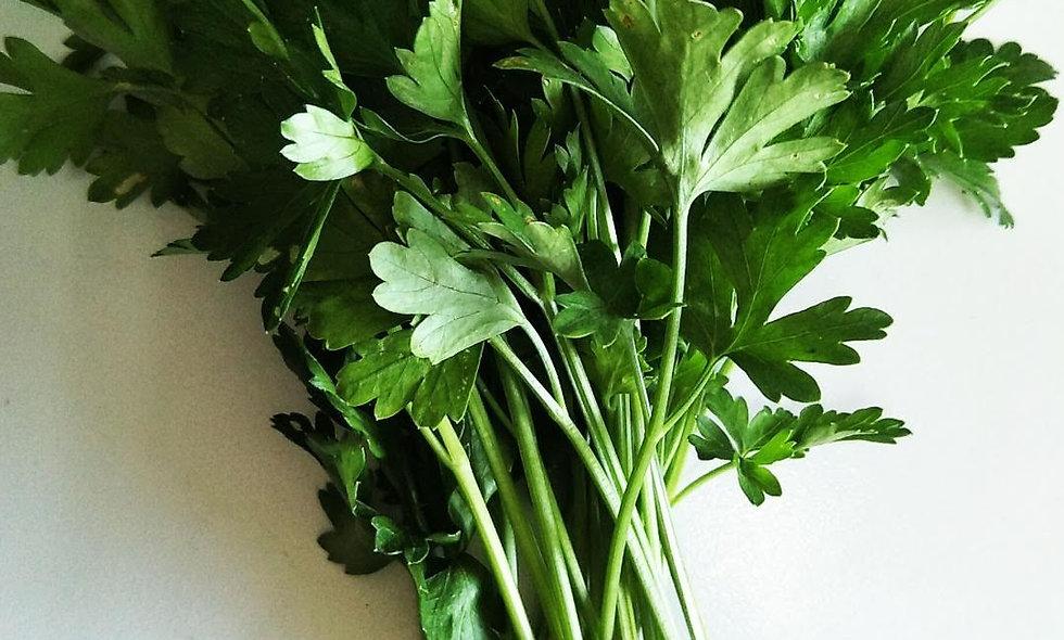 Italian flat leaf parsley (25g)