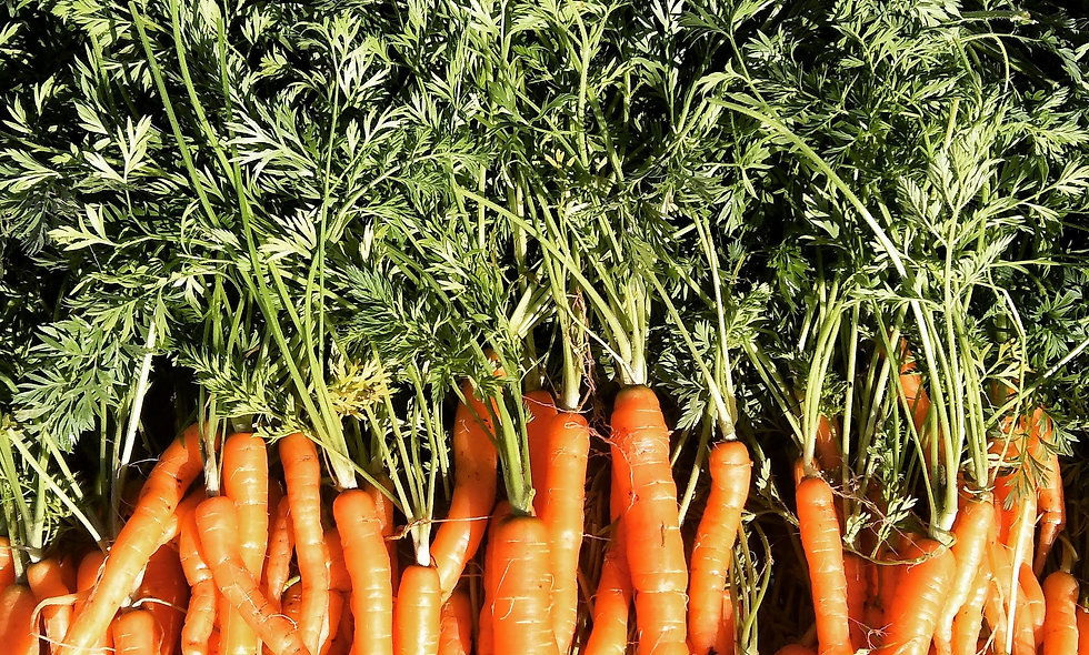 Baby carrots (bunched)
