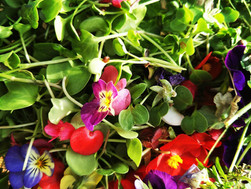 Micro greens and eatable flowers