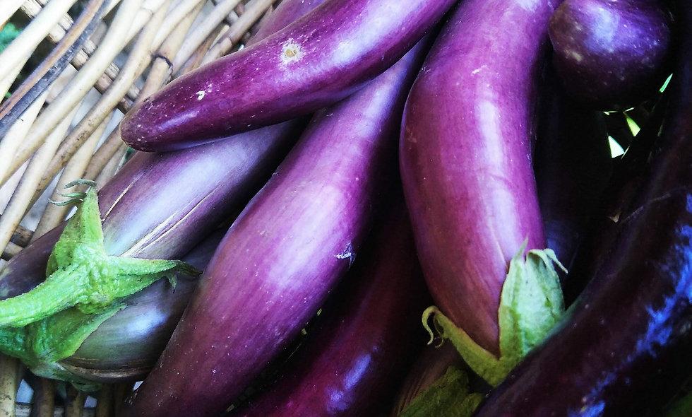 Long Eggplant