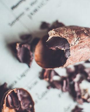 cacao bean copyright goldammer studio