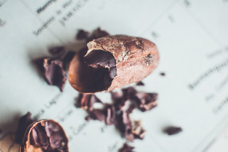 cacao bean copyright goldammer studio