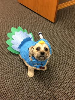 I'm a Peacock! Halloween 2016