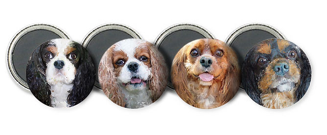 Cavalier Magnet pack: Tri, Blenheim, Ruby and Black & Tan