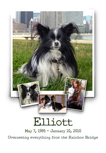 dogs, Papillon, Elliott, Inspired by Cooper and Elliott, photography, pets, art