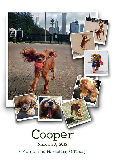 dogs, Cavalier, CKCS, Cooper, Inspired by Cooper and Elliott,photography, pets, art