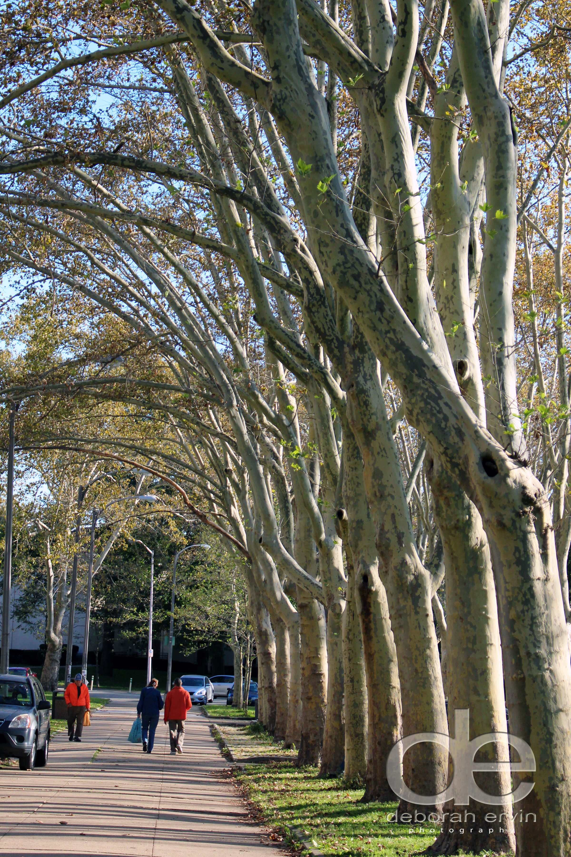 cascadetrees