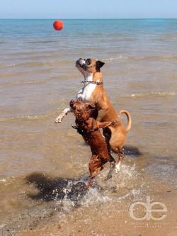 Dogs on beach