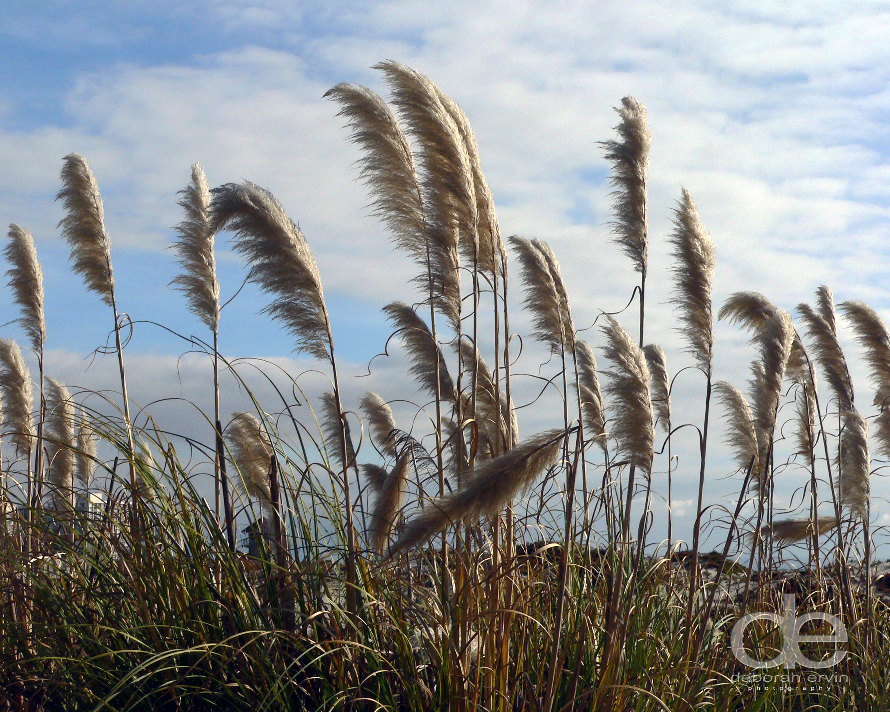 Beautiful beach weeds