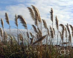 Beautiful beach weeds