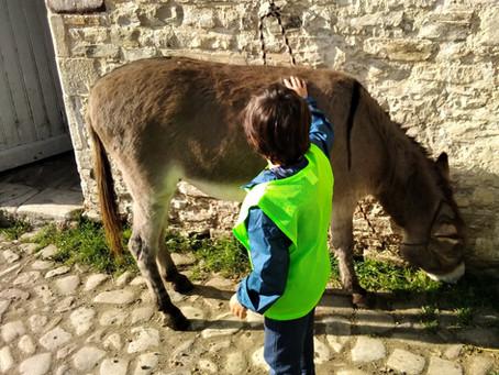 A Donkey!