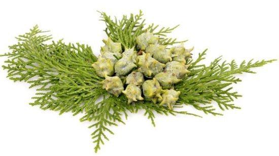 Cypress Essential Oil, 10ml