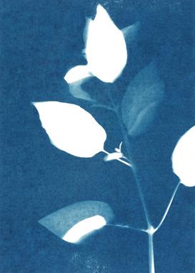 """""""Botanical Blues"""""""