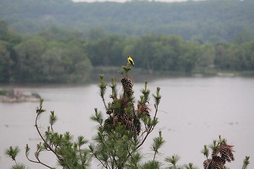 Little Bird, Big World