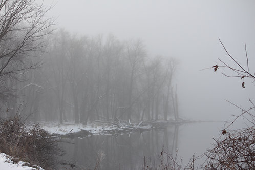 Fog over Water and Trees