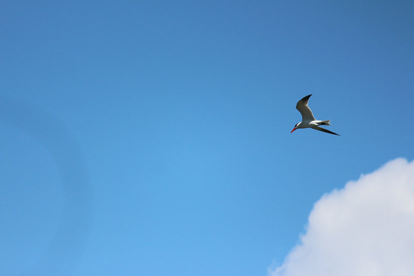 Blue Skies and Fish