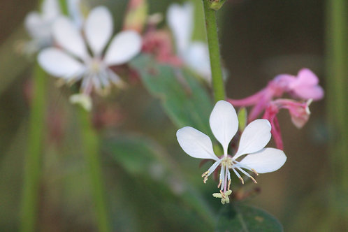 White, Pink and Green