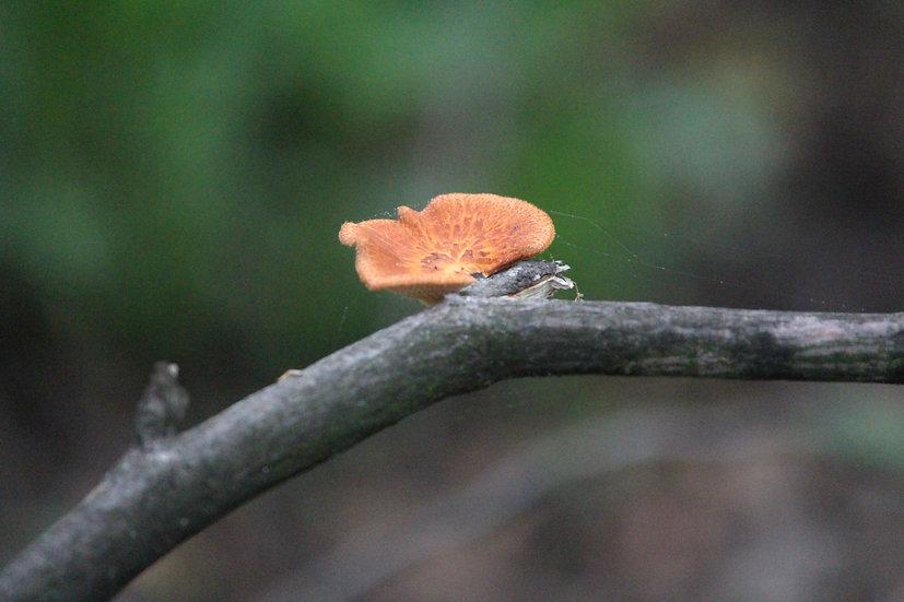 Mushroom with Webs