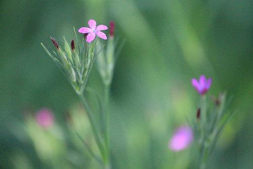 Tiny Flowers - L