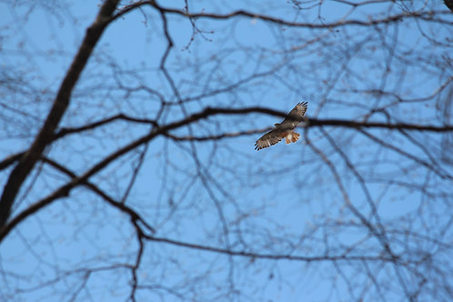 Soaring Above the Trees