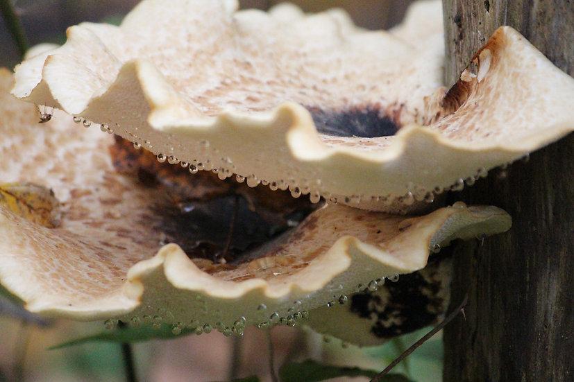 Crying Mushrooms