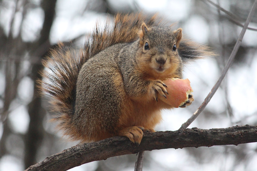 Thanks for the Apple
