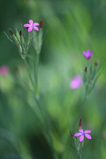 Tiny Flowers - P