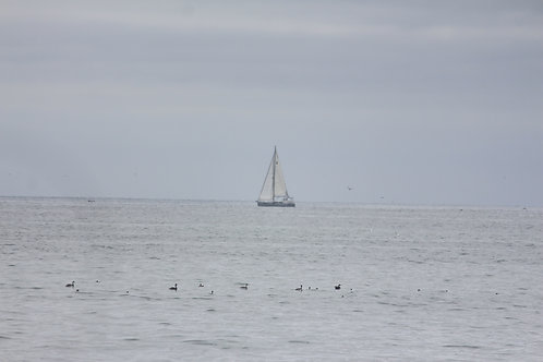 Boat & Birds
