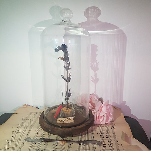 Terpene Profile Diorama in Glass Bell Jar