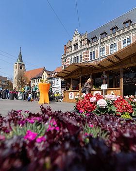 Erfurt war einen Tag bunt_