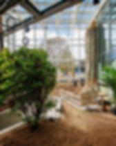 Urwaldpflanzen im Danakil.jpg