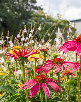 Blumen im egapark.jpg