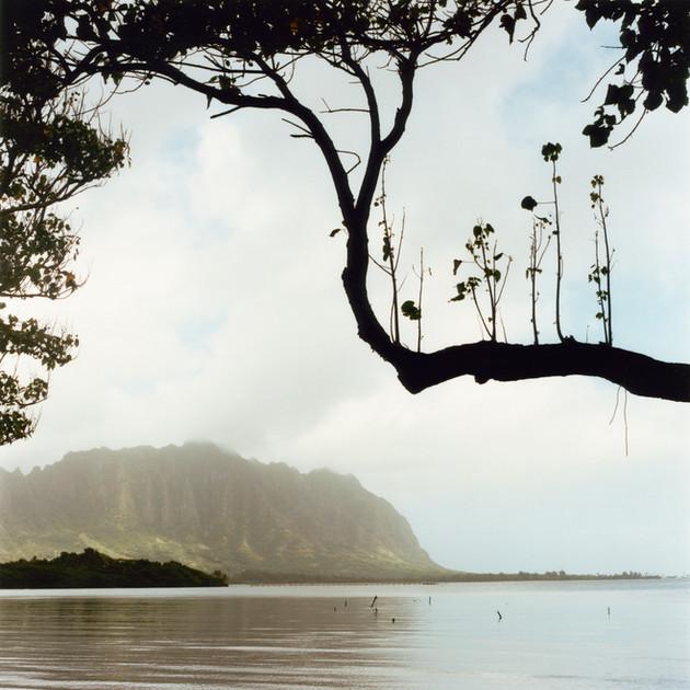 01_Ron-Hawaii1-29-1116.jpg