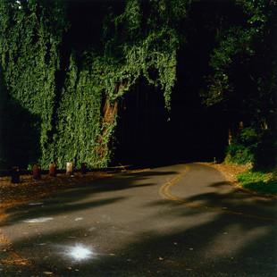 14_Ron-Hawaii 1- 1142-04.jpg