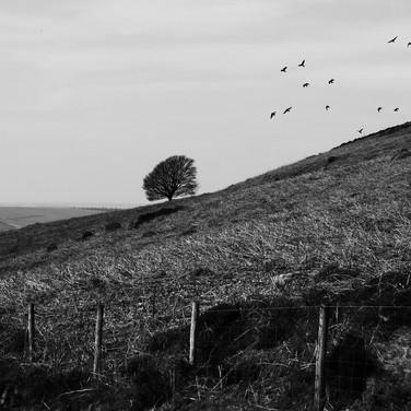 Birds Flying From Field