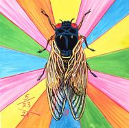 Cicada no. 13