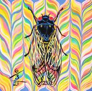 Cicada no.23