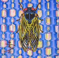 Cicada no. 34