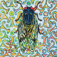 Cicada no. 36
