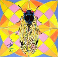 Cicada no. 20