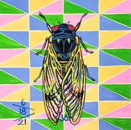 Cicada no. 39
