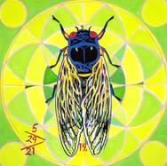 Cicada no. 19