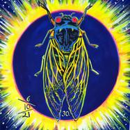 Cicada no. 30